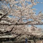 4月2日(木)