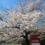 4月4日(木)